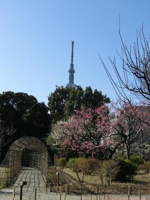 【東京】向島百花園の梅まつり2020、見頃やイベントをご紹介!