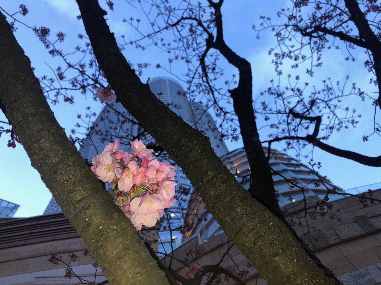 六本木ヒルズの春祭り2020!通常は非公開の屋上庭園へ!